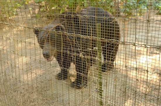 Wildlife Images - Rehabilitation & Education Center: Bears
