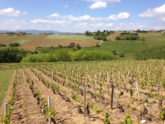 Kanpai Tours : Vineyards