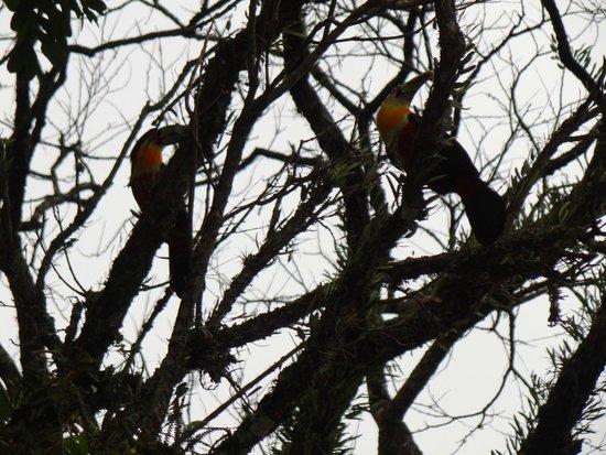 Hotel Estancia Santa Cruz: Natureza - Tucanos