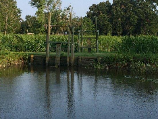 Brookgreen Gardens : On the pontoon ride.