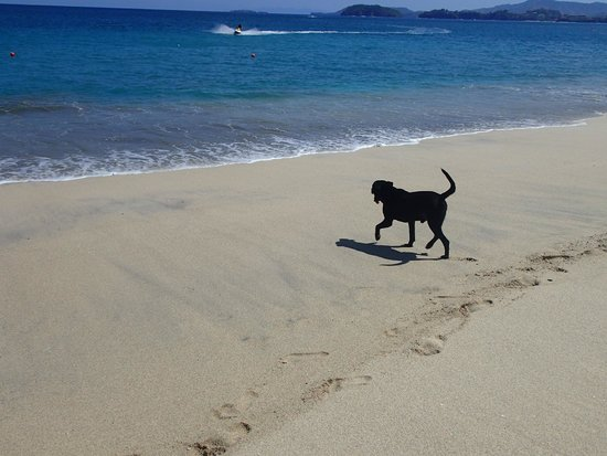 The Westin Golf Resort & Spa, Playa Conchal - An All-Inclusive Resort : Friendly Dogs