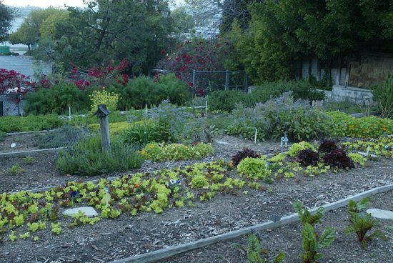 Parkway Grill: Parkway's on-premise Organic Garden