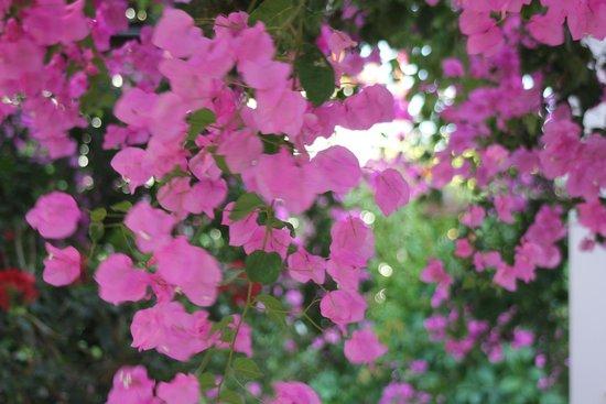 Studios Petra: Flowers