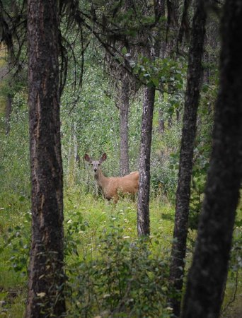 Spruce Hill Resort & Spa : many deer sightings
