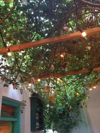 Katogi: The vines cover the patio beautifully