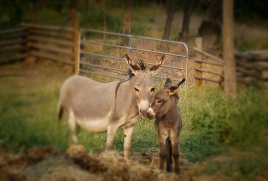Spruce Hill Resort & Spa : Linda and her 8 day old Bonita