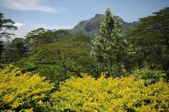 Nuwara Eliya and Tea Country: Природа