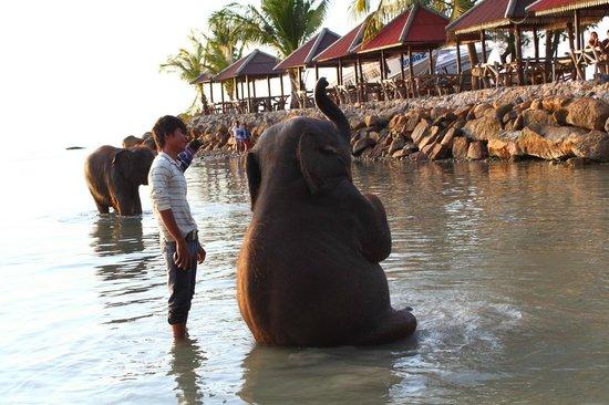 Kai Bae Beach: На пляже купают слонят