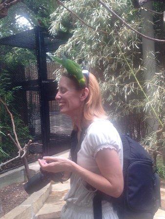 Dallas Zoo: Fun time with the birds
