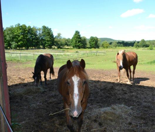 Mountain Horse Farm B&B and Wellness Retreat: Jaxon, Noah and Crickett
