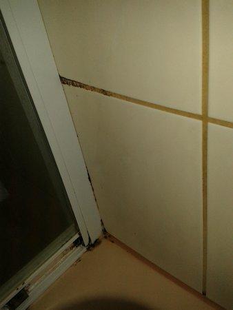 Hotel Seeblick Saalburg: Wann ist die Dusche das letzte Mal geputzt worden?