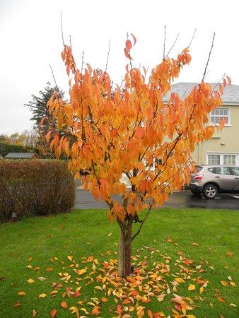 Airport Manor B&B: Irish Autumn Colours