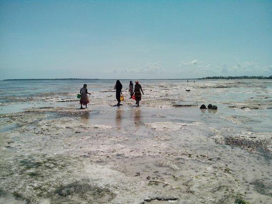 Karamba: Mujeres en la playa buscando pulpos y caracoles