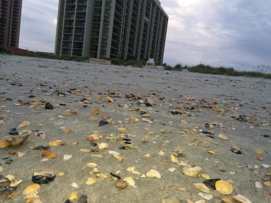 Hilton Myrtle Beach Resort: View of the line of shells across the entire beach