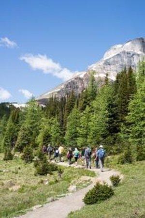 Viator Tours Banff Canada