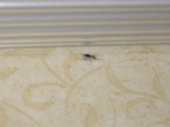 Fairfield Inn & Suites Macon: Bug crawling in bathroom