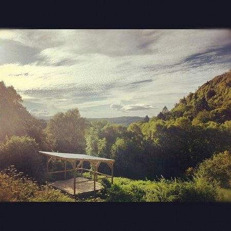 Conwy Falls Cafe : The view over our forest from our decking