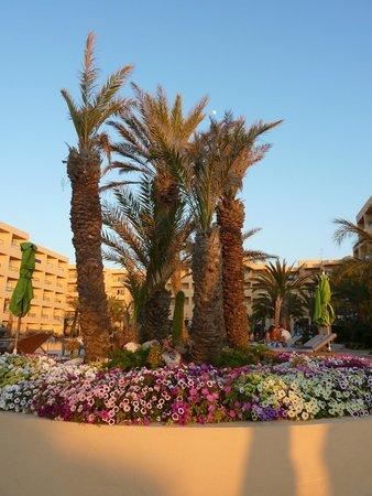 SENTIDO Rosa Beach : het hotel vanop het strand