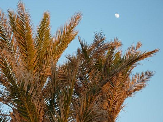 SENTIDO Rosa Beach : vollemaan