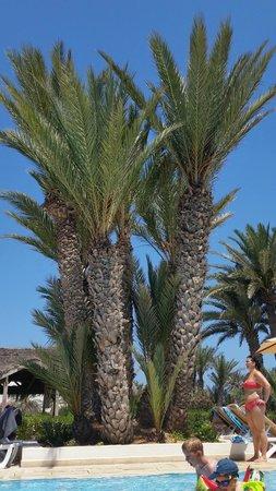 Seabel Rym Beach : De grands palmiers pour un peu d'ombre ! :)