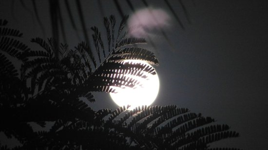 Royal West Indies Resort : supermoon over RWI