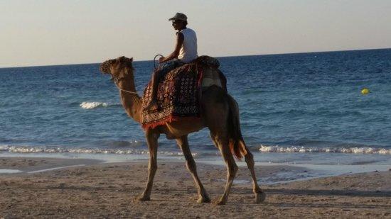 Seabel Rym Beach : Petite balade en chameau !