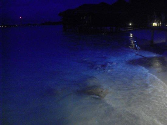 Kuramathi Island Resort: Razze visibili dal pontile