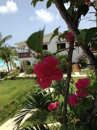 Carimar Beach Club: the beautiful flower