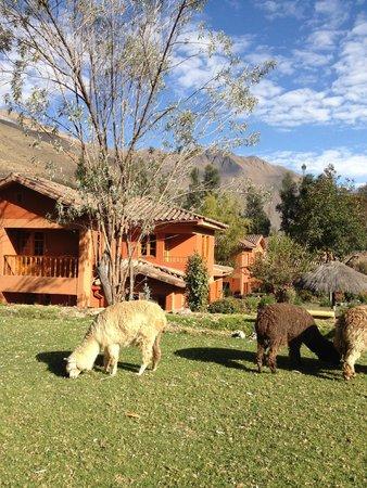 Pakaritampu Hotel: View with Alpaca