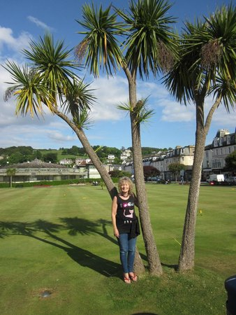 The Glenburn Hotel Ltd: palm trees at the pitch and putt on Rothesay front