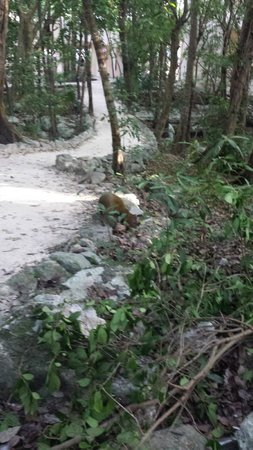 Occidental at  Xcaret Destination: furry friends on the walking path