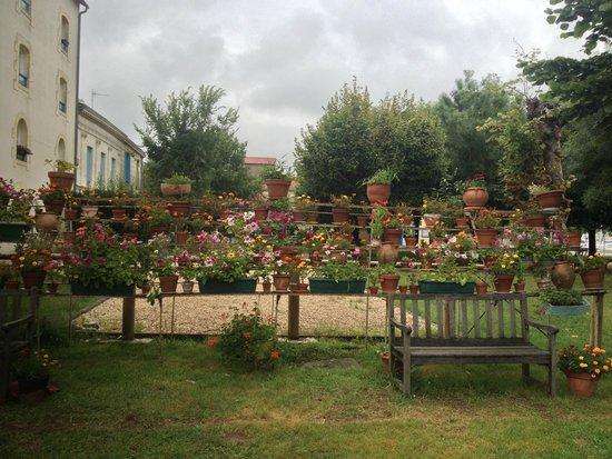 Le Domaine du Meunier : Wonderful flowers like a wall