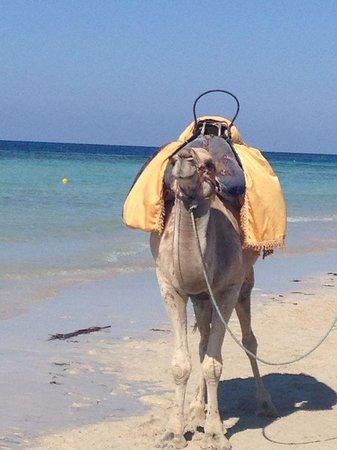 Seabel Rym Beach : ...il mare e il cammello... :)