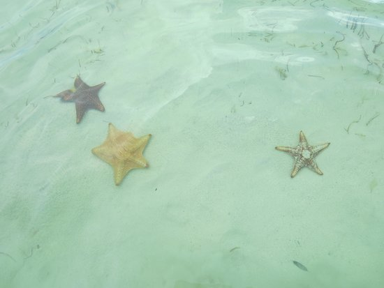 The Retreat at Rum Point: Star fish cove 3 minutes away