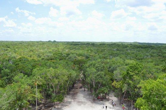 Ruines de Cobá : top view