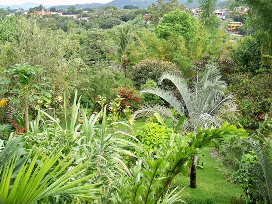 Pura Vida Hotel: Berni's beautiful garden - tropical paradise in the city