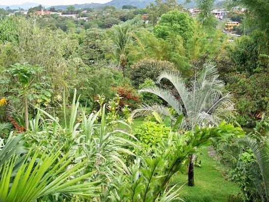 Pura Vida Hotel : Berni's beautiful garden - tropical paradise in the city