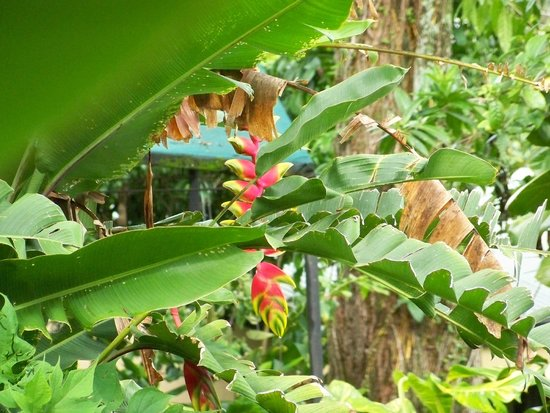 Pura Vida Hotel: Tropical flowers of Berni's garden