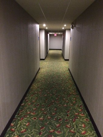 Holiday Inn Express Toronto - North York: Hallway