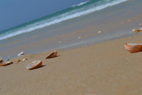 Troia Beach : Praia com areia