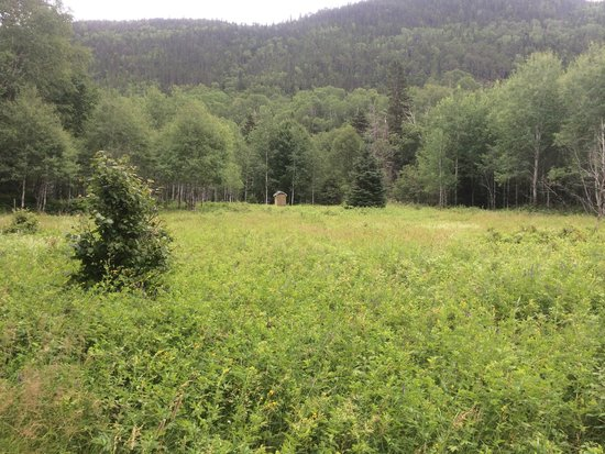 Saguenay Fjord National Park : Meadow (and outhouse for campers) along the hiking trail
