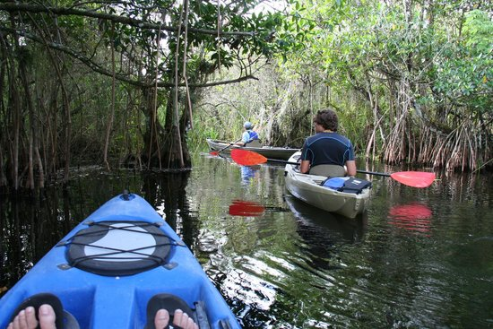 Shurr Adventure Company Day Tours: Kayaking the mangroves
