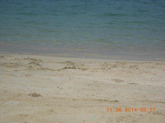 Sheraton Montazah Hotel: wonderful beach
