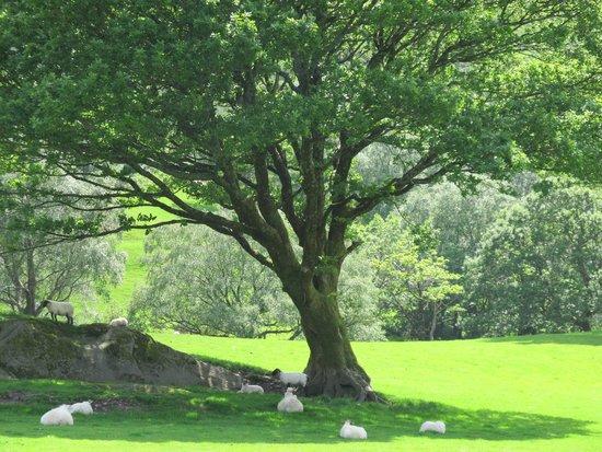 Gleninchaquin: green pastures