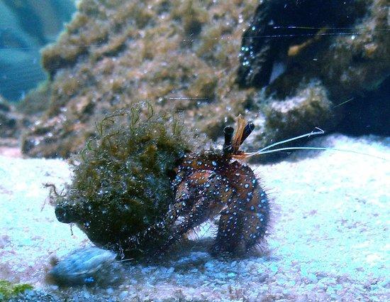 Ocean Park Aquarium: Aquarium life
