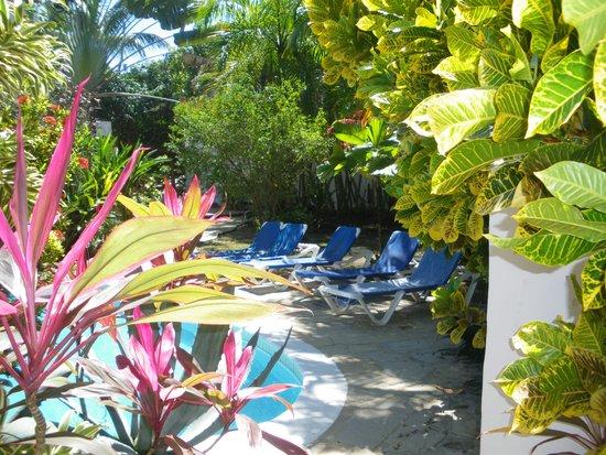 Casa Blanca Hotel & Surf Camp: Poolside gardens