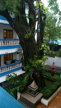Karma Royal Monterio : that old  tree  and  balconies