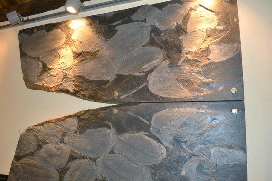Trilobites De Canelas - Picture of CIGC- Centro de
