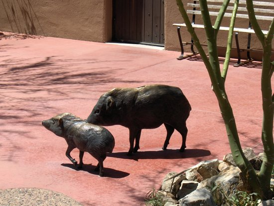 Museo del Desierto Arizona-Sonora: These javelinas aren't real, but inside you will see real ones, and smell them too!