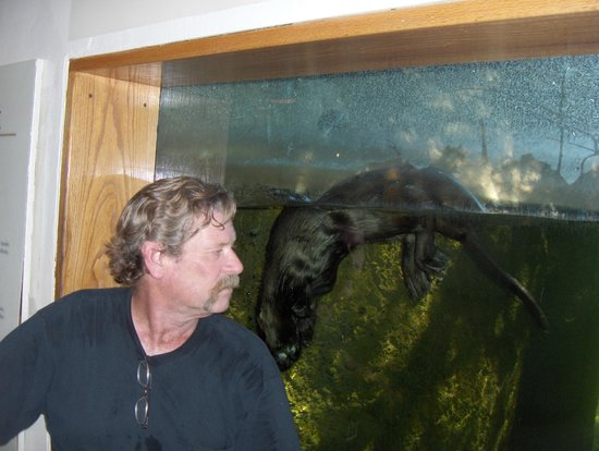 Arizona-Sonora Desert Museum: This river otter is enamoured with my husband.